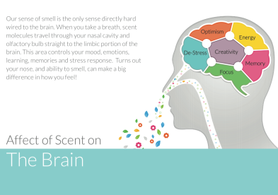 affect of scent on the brain